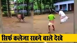 Download Man challenges Angry Bull in India #Bullfight