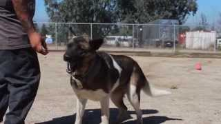 Homeless Dog - Bailey