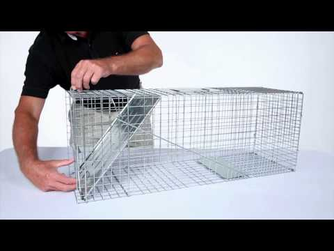 How to Set: Havahart® Large 1-Door Trap Model #1079 for Raccoons, Cats, Groundhogs and Opossums