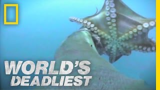 Sea Lion vs. Octopus | World