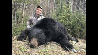 Black Bear / Grizzly Bear - Hunting Bears In British Columbia (jr Hunting)