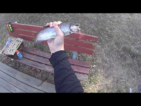 Stocked Trout Fishing (Surprise Golden Trout and Big Rainbow Trout!) 3 and 4/2016