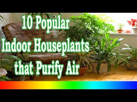 Best Indoor Plants - 10 Popular Indoor Houseplants that Purify Air
