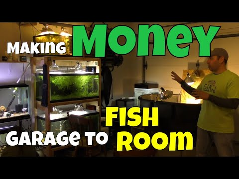 He Turned His Garage into a Fish Room to Make Money Doing What He Loves