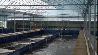 Aquamimicry RAS A1 Shrimp Farming Videos & Books