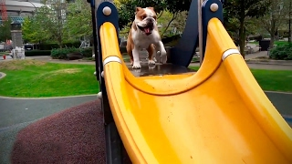 Dogs At Playground 🐶 Cute Dogs Playing On The Playground [Funny Pets]
