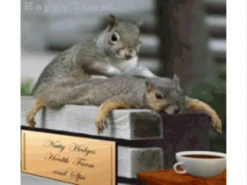Night at squirrels