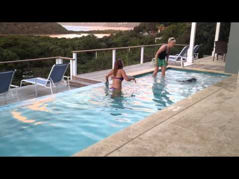 Teaching a dog to swim by The Pooch Coach