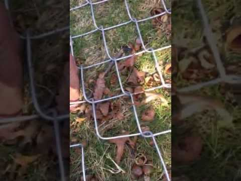DIY Tip How to seam or splice chain link Fence together