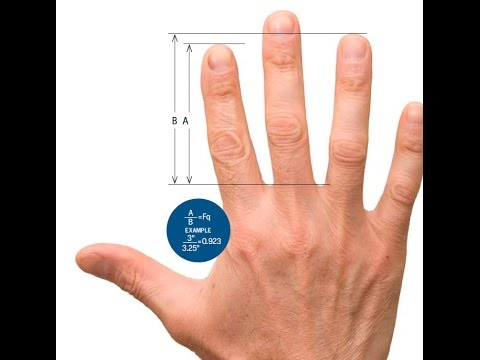 How To Judge A Man By His Fingers | Science News