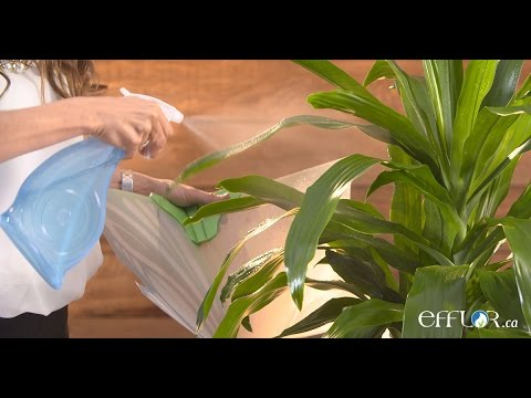 Why and how to Spray your Plants