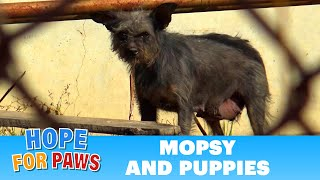 Dog gives birth near electric power lines - it took us 6 hours to save them!