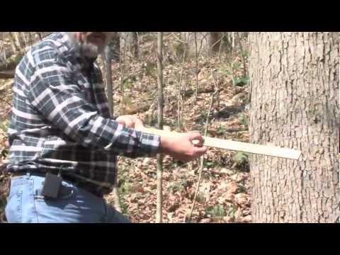 MEASURING TREE VOLUME