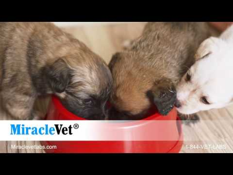 Dog Weight Gainer by Miracle Vet — 2,400 calories per bottle