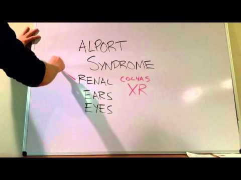 Alport Syndrome High-Yield Review