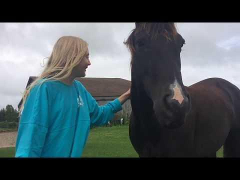 MEET THE HORSES 🐴