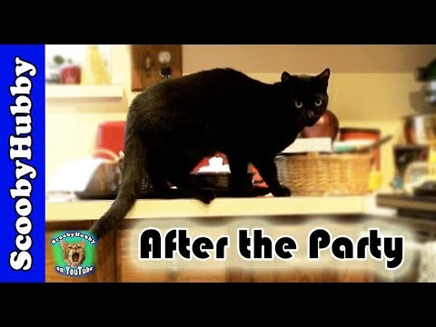 After the Party -- Cat Clips #24