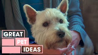 How To Stop A Dog From Barking At The TV | Pets | Great Home Ideas