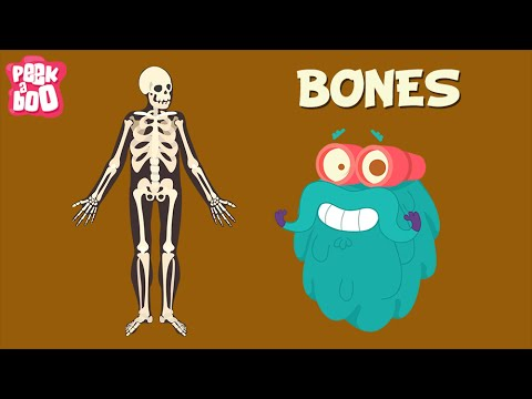Bones | The Dr. Binocs Show | Learn Videos For Kids