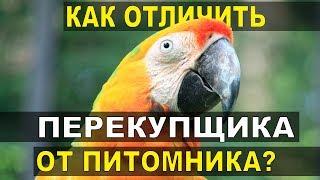 Как отличить настоящий питомник попугаев от перекупщиков?
