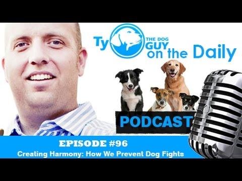 Episode # 96 - Creating Harmony: How We Prevent Dog Fights - Utah Dog Training