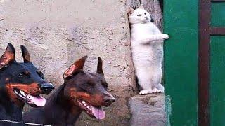 Es peligroso mirar Puedes morir de la risa!!! Gatos vs Perros - ¿Quién gana?