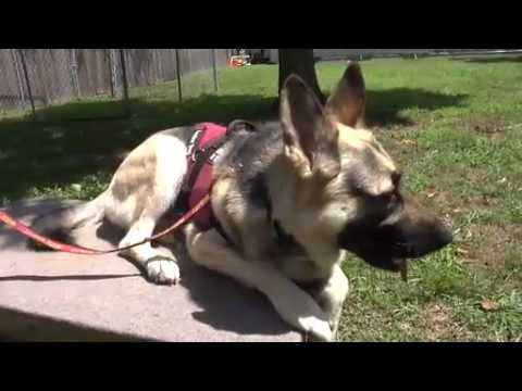 Service Dogs Help Veterans Suffering From PTSD