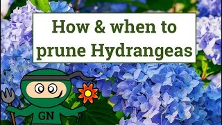 How and when to prune Hydrangeas