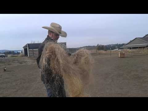 Break up your hay for your horse before you feed it