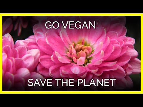 Go Vegan—Save the Planet