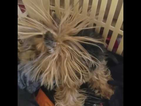 My Dog Justice Has Static!!!!!