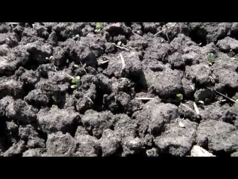 Improving Soil Health on Sodium-Affected Soils