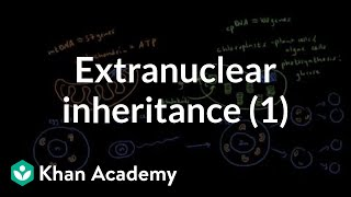 Extranuclear inheritance 1 | Biomolecules | MCAT | Khan Academy