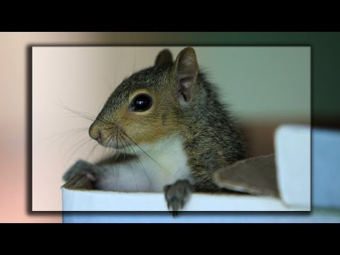 My Cute Baby Squirrel (2) - Drinking milk with cup