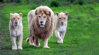The Lion Man  الفيلم التركي الرجل الاسد