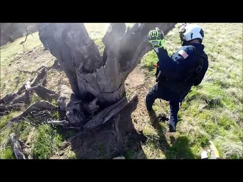 Sheriff's Office STARR 1 Helicopter Crew Rescue Calf Stuck in a Tree