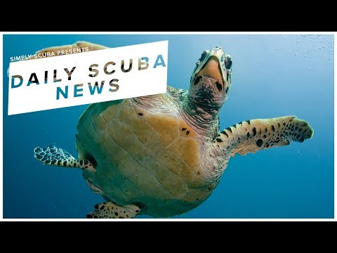 Daily Scuba News - Scuba Divers Save Sea Turtle