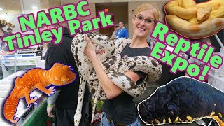 Attending a HUGE Reptile Show! (Tinley NARBC October 2019!!)