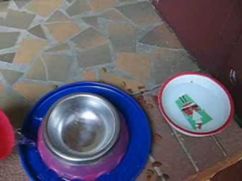 How-To, Keep ants out of your pet's food bowl.