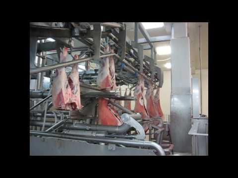 Scott - Automated Lamb Primal Cutting