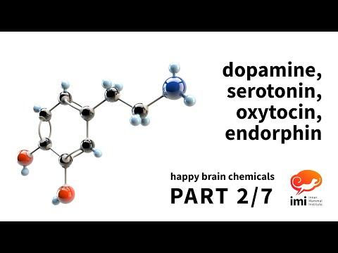 Dopamine, Serotonin, Oxytocin, Endorphin (#2 of 7)