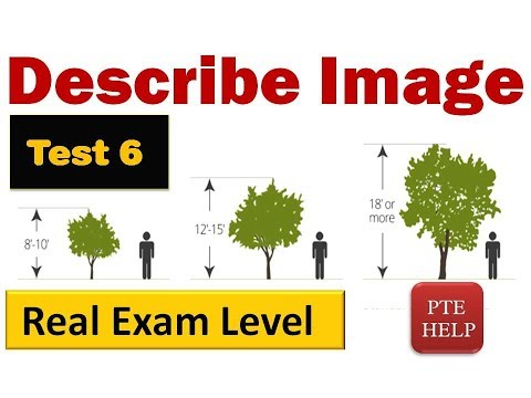 PTE Real Exam type Speaking Describe Image| Tree size| with Sample 86+ scores answers