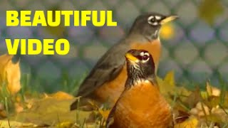 AMAZING Videos for Cats to Watch - : Little Birds !