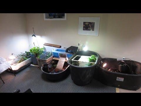 My Turtle Room