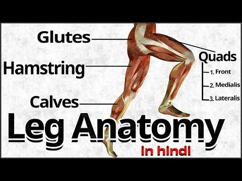 Best Exercises For Build Legs Muscles | LEG ANATOMY | Hindi