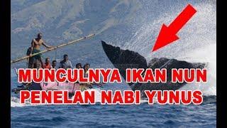 Misteri Penampakan Ikan NUN TERBESAR DI DUNIA Yang Pernah Menelan Nabi Yunus