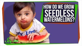 How Do Seedless Watermelons Reproduce?