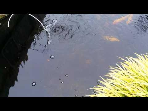 Koi Pond Winterized