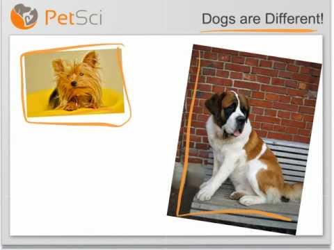 Calculating Your Dog's BMI and BCS