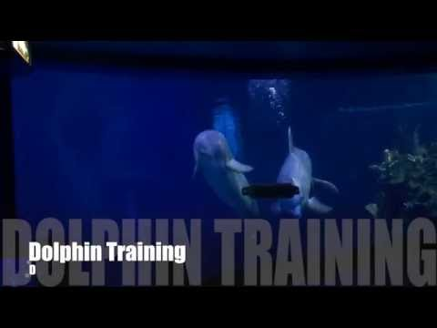 Dolphin Training at Disney World Epcot: Living Seas with Nemo and Friends